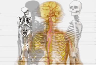 image - skeletons
