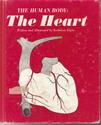 Human Body The Heart