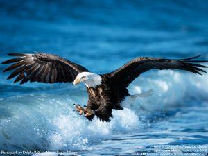 Assyria represented by an eagle | Hosea 8:1